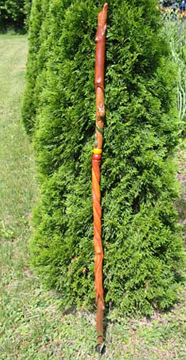 nature walking stick